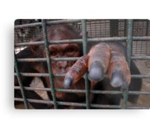 Chimp Bars Metal Print