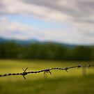Barb Wire by Friendly Photog