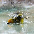 Bathtime by David Clarke