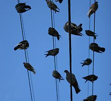 Birds on a Wire by Jrod