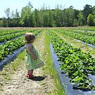 Dantzler Strawberry Farm by Leta Davenport