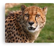 Cheetah 3 Canvas Print