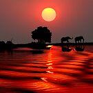 SUNSET WITH ELEPHANTS - BOTSWANA by Michael Sheridan