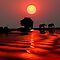 SUNSET WITH ELEPHANTS - BOTSWANA by Michael Sheridan