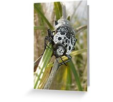 Black and White Beetle Greeting Card