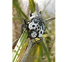 Black and White Beetle Photographic Print