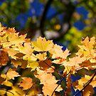 Leaf Arch by Friendly Photog