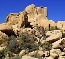 Joshua Tree National Park by Bob Moore