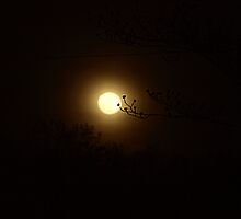 Dogwood Moon by kimbarose
