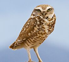 041109 Burrowing Owl by Marvin Collins