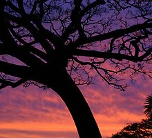 Tree Silhouette with pink sunset  by Lesley Ortiz