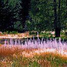 Purple Haze by John Brotheridge