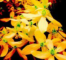 Orange Flowers by John Croyne