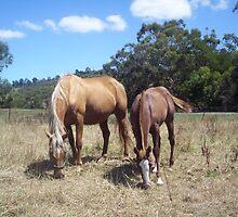 Skyhorses by skyhorse
