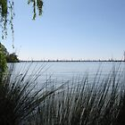 Lake Mulwala through the reeds by David Hunt