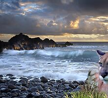 1199-Coastal California Cougar Sunset by George W Banks