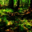 The Big Thicket Nature Preserve by DottieDees