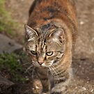 Razzle on the prowl by TheKoopaBros