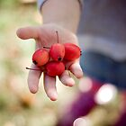 picking crabapples by narelle sartain