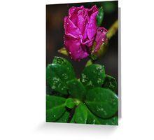 Azalia Bud Greeting Card