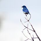 bluebird on a limb by CheyAnne Sexton