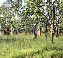Termite Hills in Far North Queensland by Heinz
