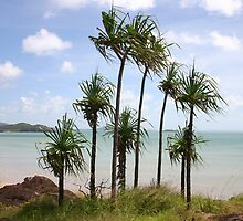 Cape York by Heinz