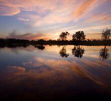 Kakadu Morning.  by DaveBassett