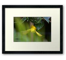 Golden Palm Weaver 4 Framed Print