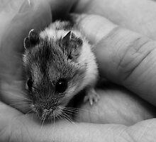 Little Squeaker by J Cole