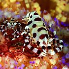 Colemans Shrimp by MattTworkowski