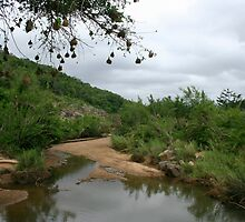 Hluhluwe-Imfolozi National Park by zumi