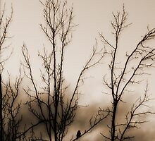 Sunset Watcher In Sepia by WaleskaL