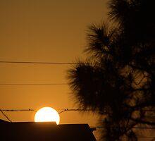 Plugged Into the Sun by Donna Adamski