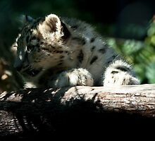 New Snow Leopard III by Blurto