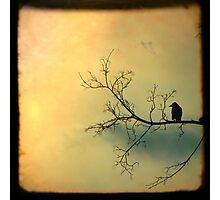 Mellow Photographic Print