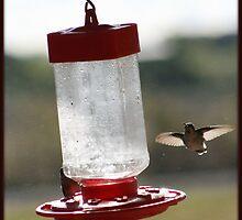 Hummingbird wingspan by jujubean