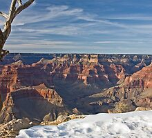 Grand Canyon, South Rim by Jan Cartwright