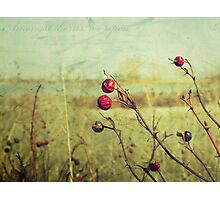 Amongst thorns, we ripen : Featured Work Photographic Print