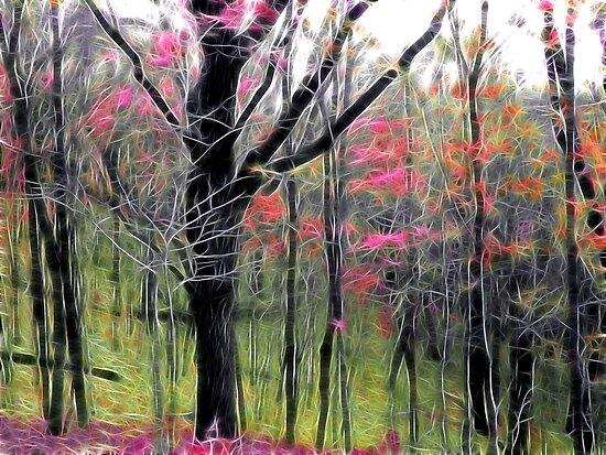 Enchanted by Kelly Cavanaugh