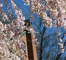 Spring Glory by vadim19