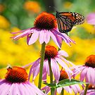 Butterfly in Summer2 by photographyjen