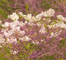 Dogwood Bouquet by sundawg7