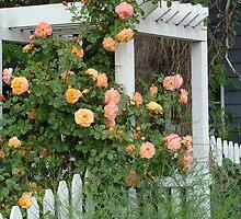 Rose Trellis by Linda Scott