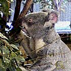 Adorable Koala by Calliope-Oz