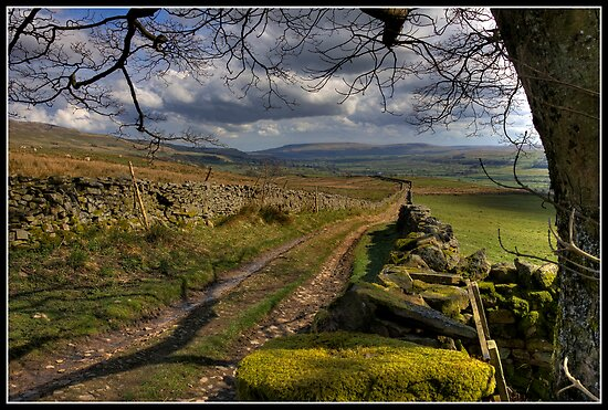 Dry stone walls above Askrigg by Shaun Whiteman