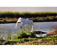 The Flight of the Egret 3 Photographic Print