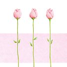 3 Pink Rosebuds by mrana