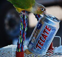 Drunkin Bird by k8stribe