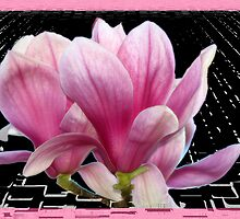 Pink Magnolia by LudaNayvelt